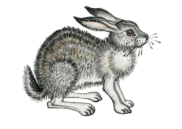 Hand drawn wild animal sitting hare illustration isolated on white background pastel watercolor