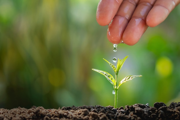 Hand of farmer watering to small plant in garden background