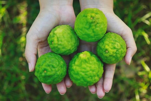 Hand girl holding bergamot or kaffir herb for healthy lifestyle