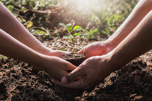 Hand helping planting tree in garden. eco concept