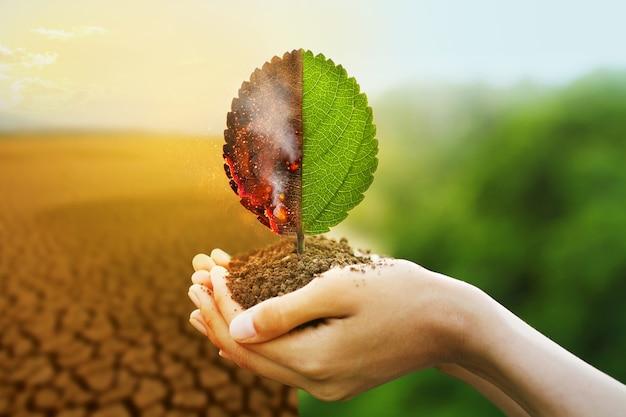 Рука держит горящий лист и зеленый с размытием сухой реки и леса