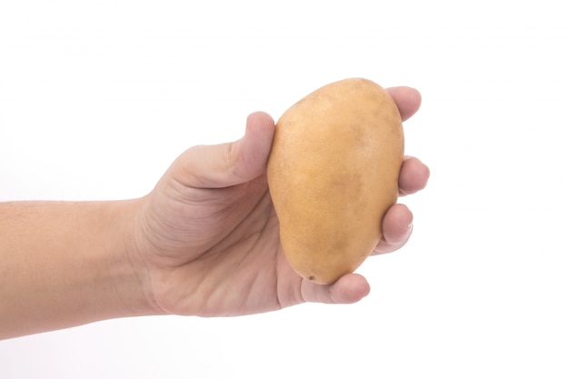 Hand hold potato with white background
