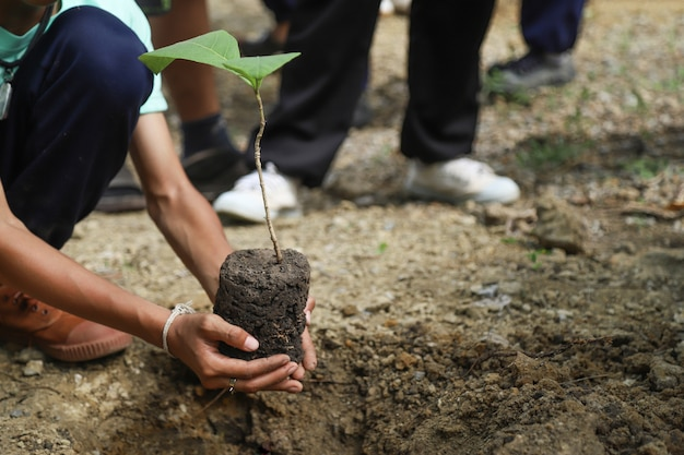 Hand hold tree for planting in world environment day