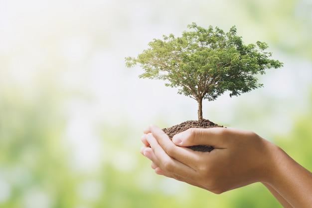 Вручите holdig большое дерево растя на зеленой предпосылке. эко земля день концепция