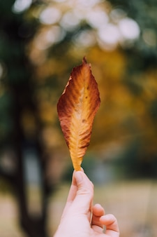 Hand holdig yeloow leaf on blurred background. autumn season.