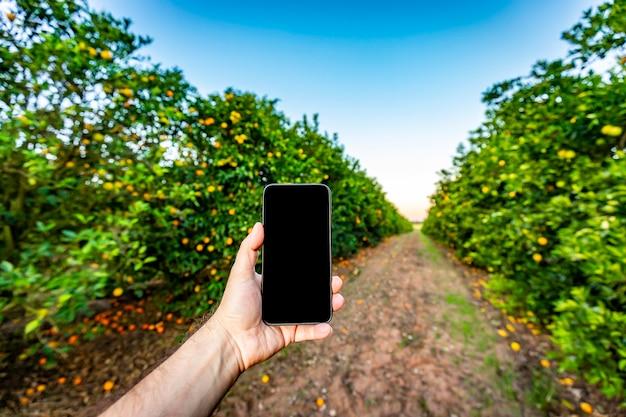 オレンジの木のフロンで携帯電話を持っている手。農業デザインのモックアップ。