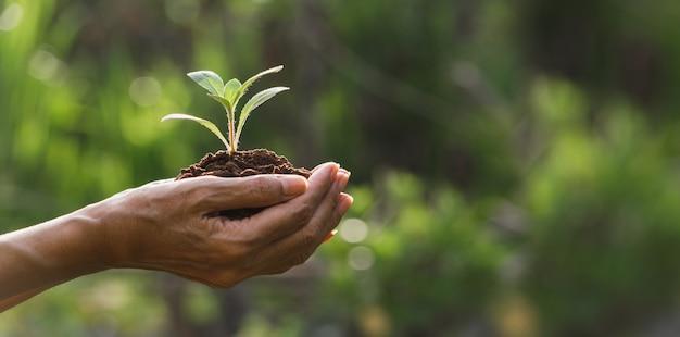 Рука зеленый и маленький завод. зеленые свежие растения на фоне природы.