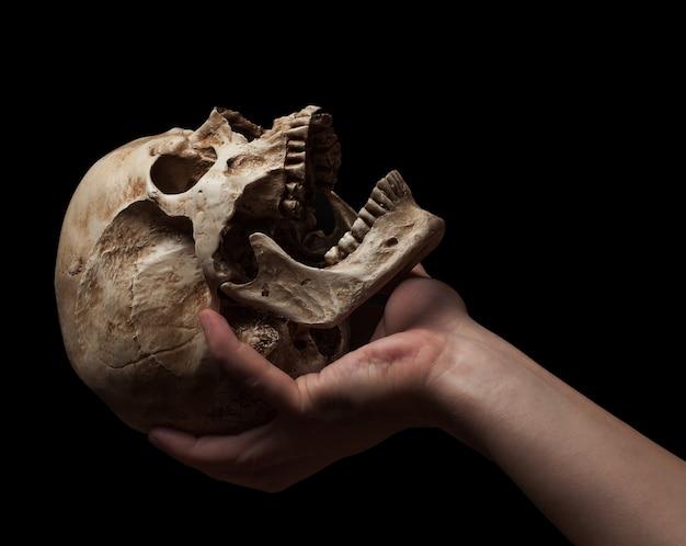 頭蓋骨を持っている手を分離します。