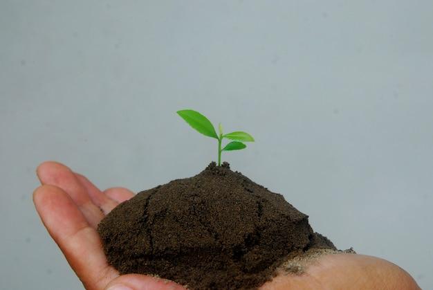 작은 묘목 식물을 들고 손