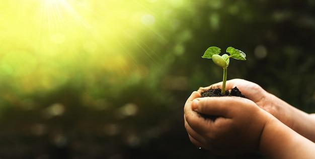 손을 잡고 흐림 녹색 자연 배경에 콩 식물. 환경 개념 세계 지구의 날