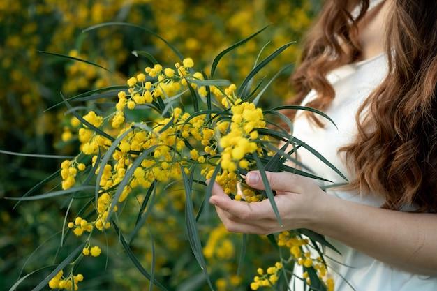 Рука, держащая обходные ножницы, обрезка желтых цветов акации, сезонная работа