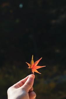 Hand holding colorful autumn maple leaf with dark background