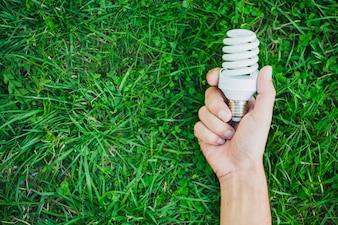 Hand holding compact fluorescent light bulb over green grass