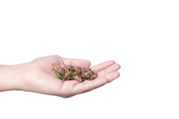 手は深い揚げたクリケット、蛋白質でいっぱいの昆虫、有名なタイ通りの食べ物