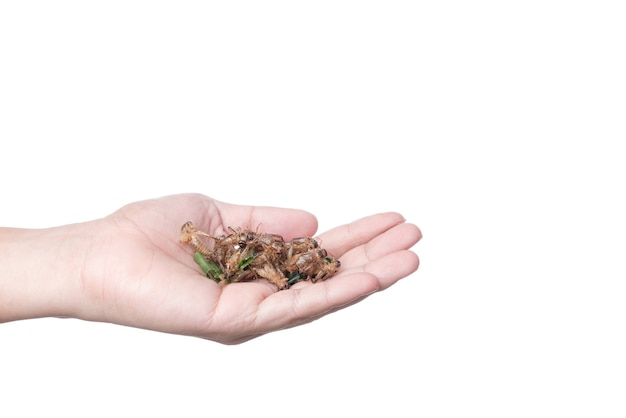 Hand holding deep fried cricket, an insect full of protein, famous thai street food