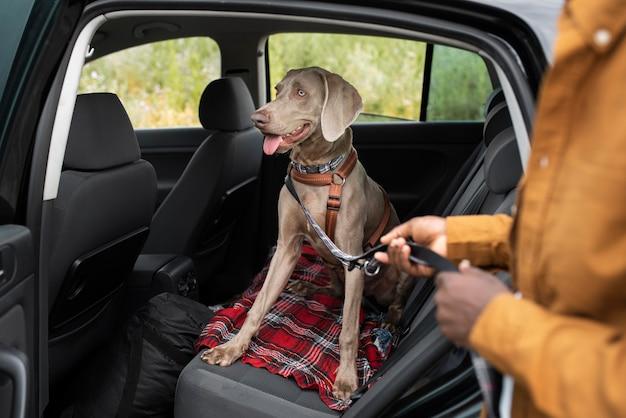 Primo piano del guinzaglio del cane che tiene la mano