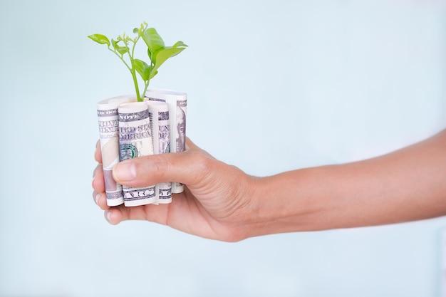 Рука, держащая доллары с маленьким деревом на голубом фоне