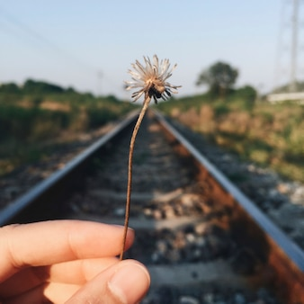 Hand holding dried flower