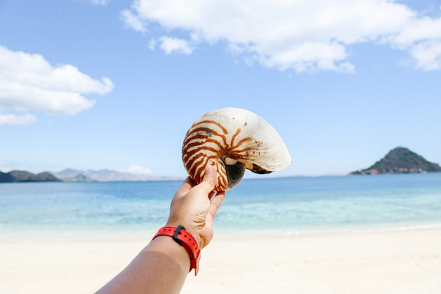 Hand holding empty hermit crab shell with blurry background of beach for summer background