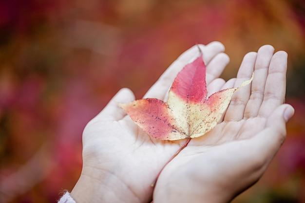 落ちたカエデの葉を持っている手