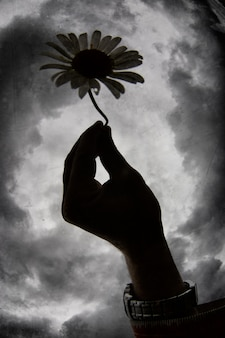Hand holding a flower against the background of a dramatic sky