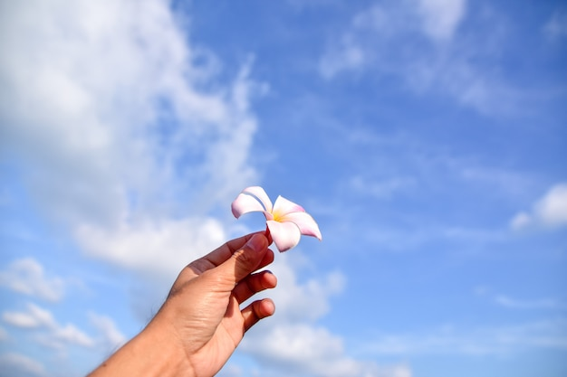 Hand holding flower at sea blue sky background
