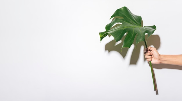 Hand holding foliage leaf with copy space