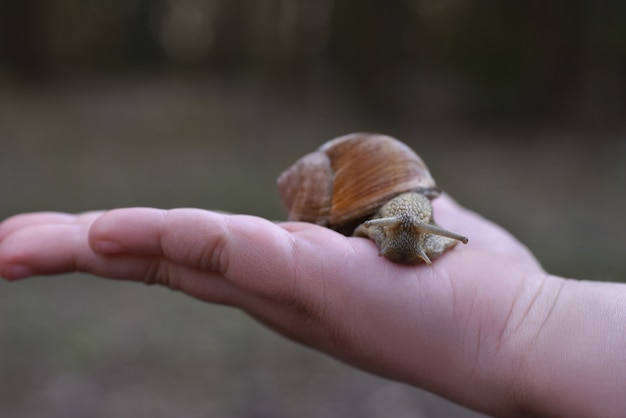Hand holding a forest grape snail