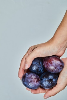 Hand holding fresh plums on a gray background