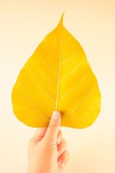 Hand holding the golden bodhi leaf