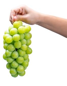 分離された緑のブドウを持っている手