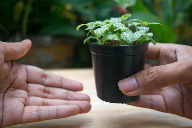 Hand holding green plant pot