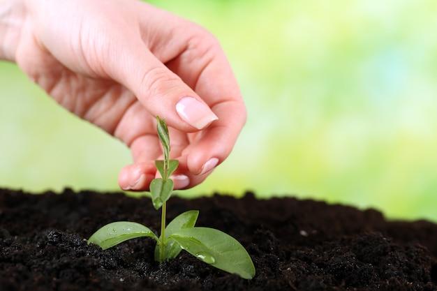 緑の苗を土で持つ手