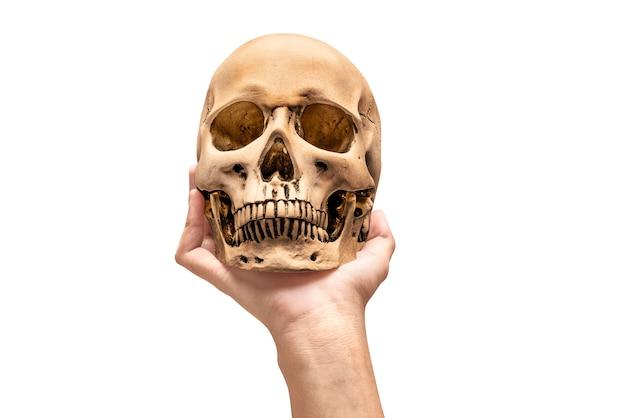 Hand holding human skull