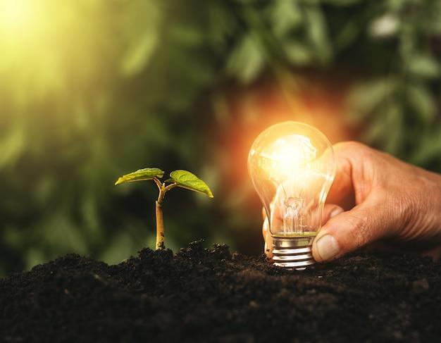 電球と植物を土壌に持っている手。自然、ビジネス、節約、成長、成功におけるエネルギー節約のコンセプト。アイデアと革新