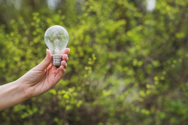 Hand holding light bulbs