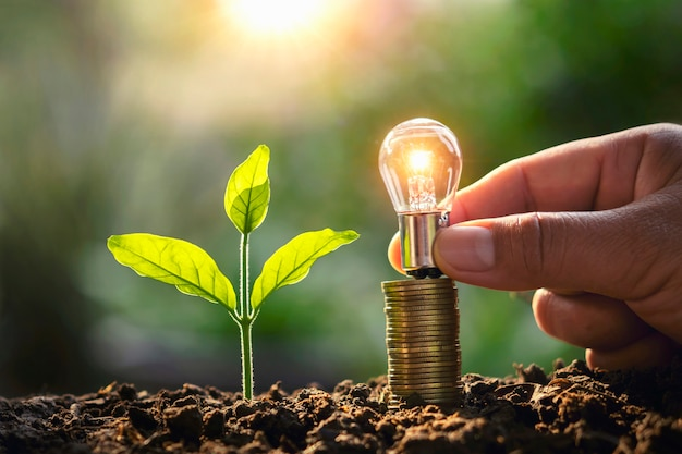 Hand holding lightbulb money stack and young plant in nature. idea saving energy and accounting finance concept