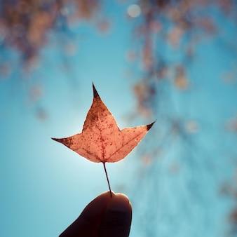 Hand holding orange autumn maple leaf against blue sky