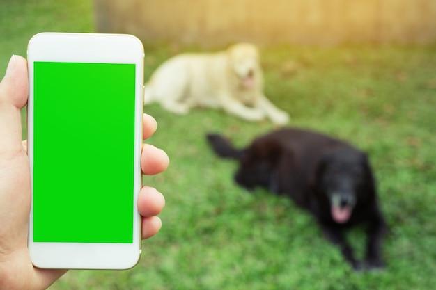 携帯電話を持っている手スペースディスプレイの緑色の画面の背景を残します芝生の犬のペット。