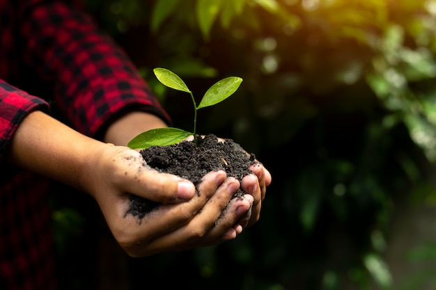 Hand holding plant with bokeh and nature background, save the world and world environment.