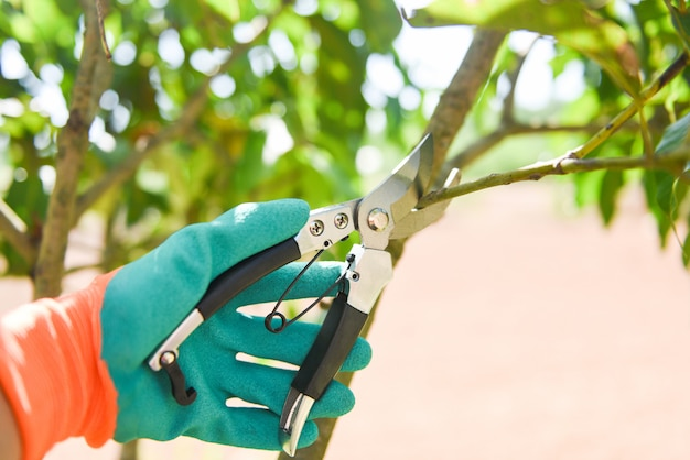 Hand holding pruning shears in the garden