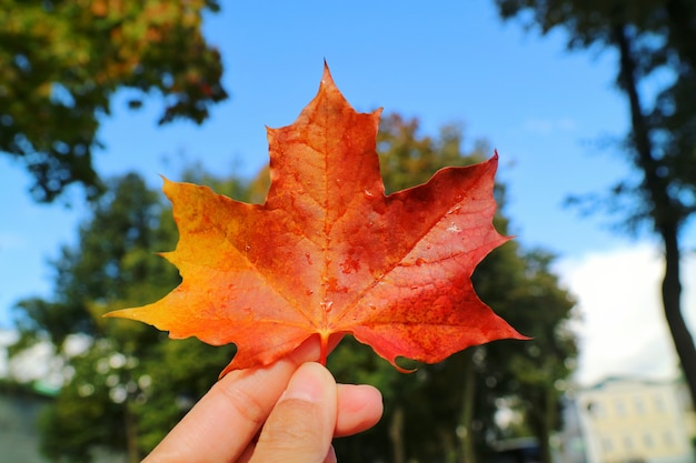 Hand holding red maple leaf with blurred of colorful tree leaves and blue sky background.
