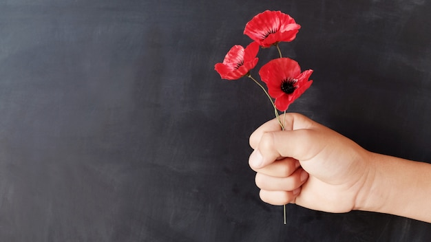 Hand holding red poppy flowers, remembrance day
