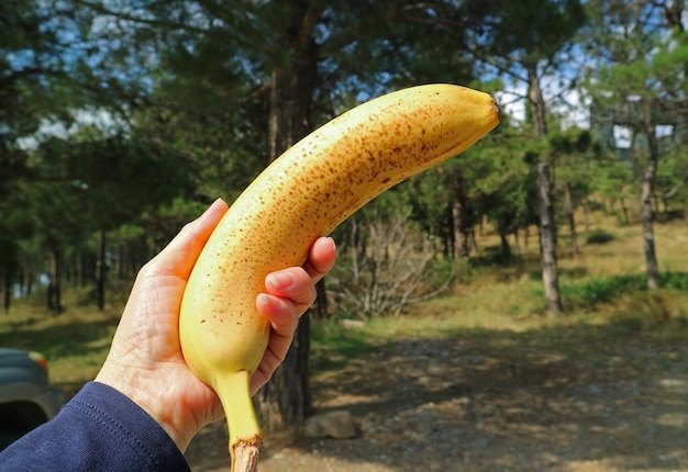 Hand holding a ripe banana with brown spots on its skin with blurry forest in background