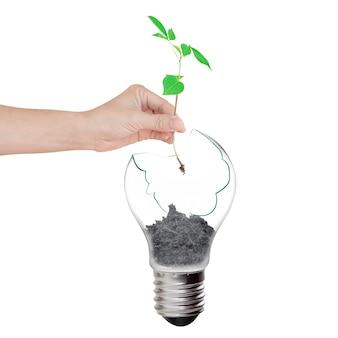 小さな植物を持って、壊れたランプを入れる手