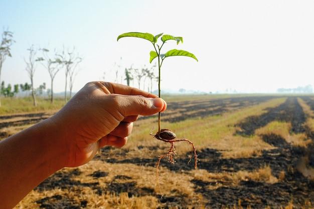 손을 잡고 작은 식물