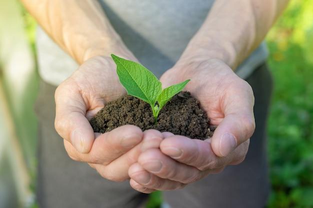 Рука, держащая небольшое дерево для посадки концепция зеленого всемирного дня земли
