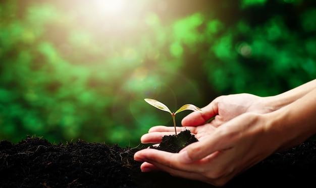 Рука держит маленькое дерево для посадки концепции зеленый всемирный день земли