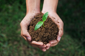 Hand holding small tree for planting. eco concept