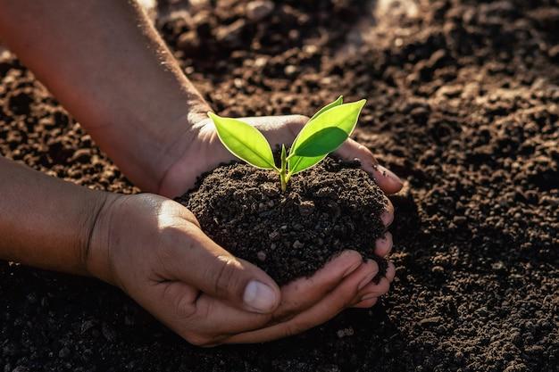 朝の光で植えるための小さな木を持っている手。
